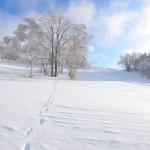 2016-17シーズン スキー場オープン情報